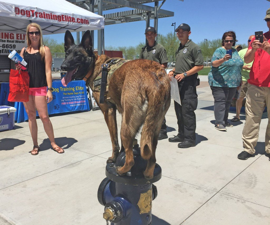 Desert K-9 Competition