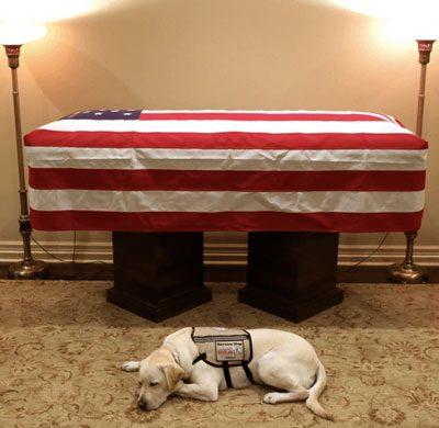Sully Service Dog President Bush